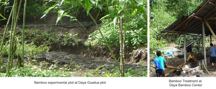 bamboo plot & treatment